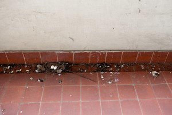 Na balkóne sa dá nájsť aj hniezdo.