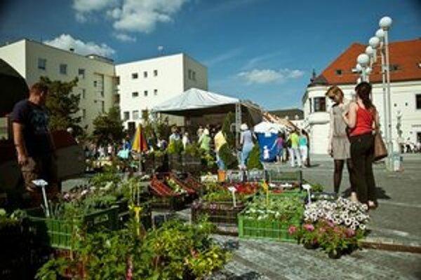 Májový kvet je v Trnave tradičným podujatím.