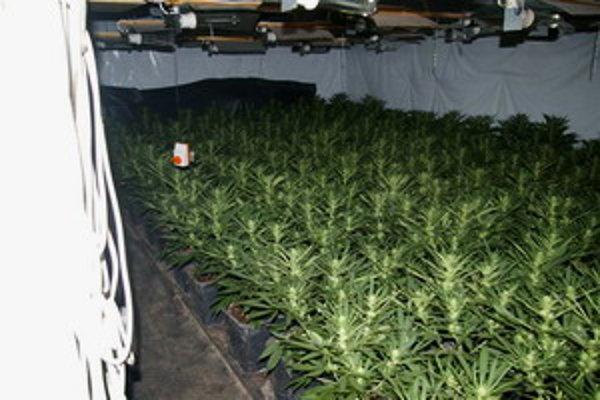 Policajti zaistili viac ako 600 rastlín.