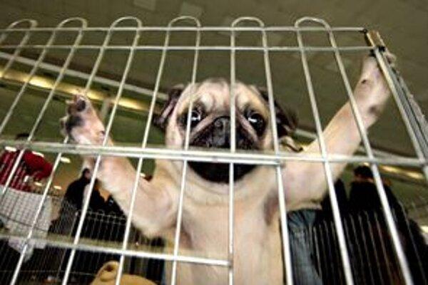 Záujem o adopciu psíkov klesá