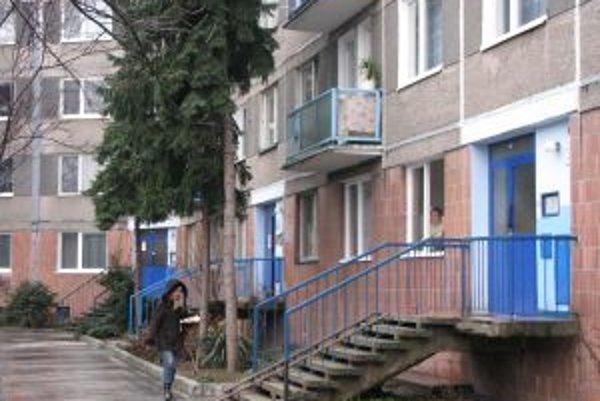Na mnohých sídliskách rastú stromy tesne pod oknami bytov