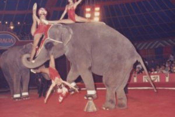 Mária Vidová sa niekoľko rokov venovala akrobacii na slonoch.