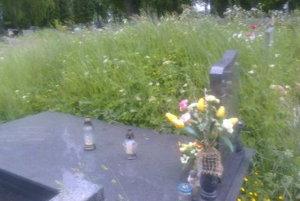 Nepokosený cintorín