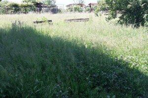 Kosenie v Prievidzi