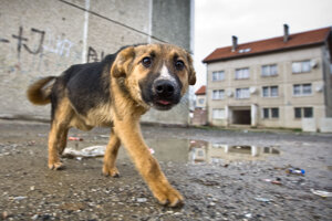 Venčenie psa bez dozoru