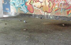Potkany pd starým Tescom