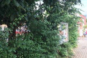Džungľa pred stanicou