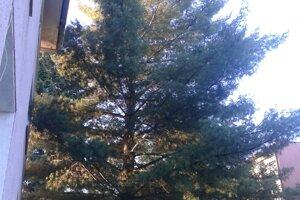 Nebezpečný strom