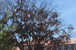 Suchý strom