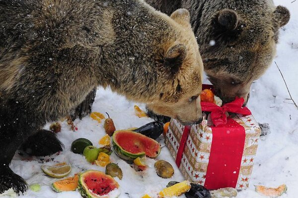Could it be fresh salmon? Cindy and her brother Ťapík celebrate their ninth birthday.