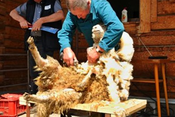 Sheep shearing is part of many competitions and festivals, like the one in Východná.