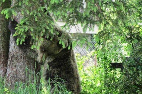 Ingrid the bear