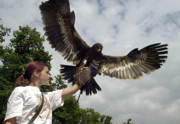 Falconry, illustrative stock photo