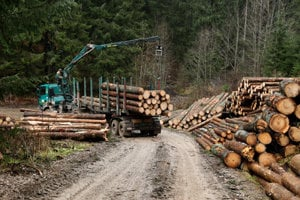 logging at Muránska Planina