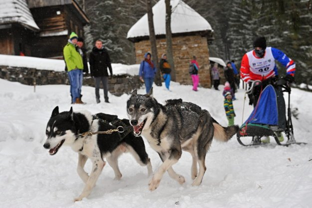 A mushing race in Zuberec