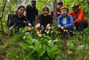 Hikers follow orchids in bloom