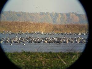 Devínske jazero and Východoslovenská nížina are some of the most popular spots for birdwatching.