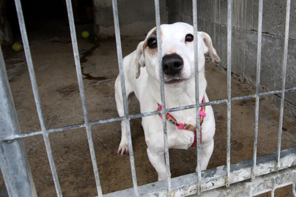 The SNS and the Sloboda zvierat animal welfare organisation have come up with a proposal to ban the chaining of dogs
