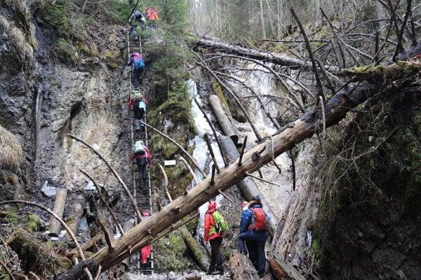 Tourists climb up a ladder in the national park Slovenský raj.