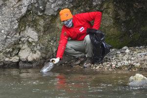 WEEK 14: A man picks litter from the River Hornád in the Slovenský raj national park.