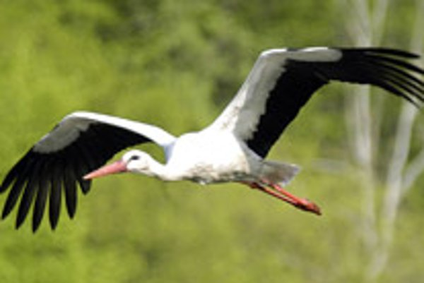 White storks have already started arriving from South Africa.
