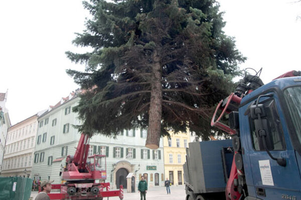 The Christmas tree at the Main Square is 15 m tall.
