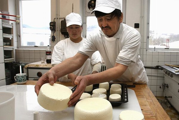 Mongolians have been making cheese from yak's milk for centuries.