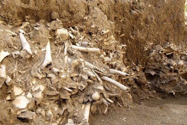 The remains of a large charnel house were uncovered near the church of St. Nicolas in Trnava.