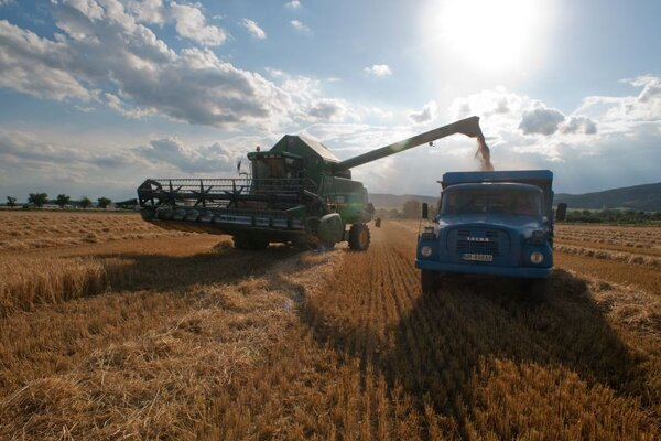 This year's cereal harvest is leaving Slovak farmers disappointed.