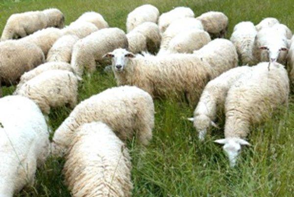 Shepherding has long tradition in the Liptov region.