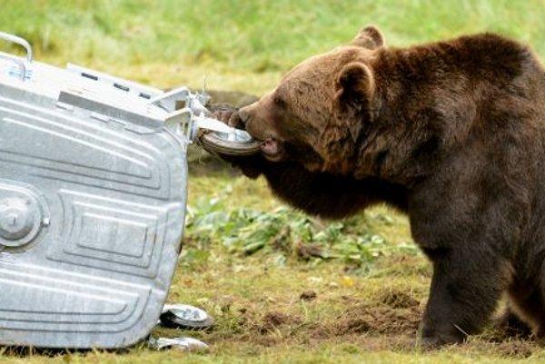 Bear test in the zoo košice,