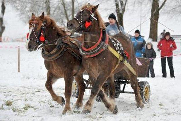 Draught horses, Bytča