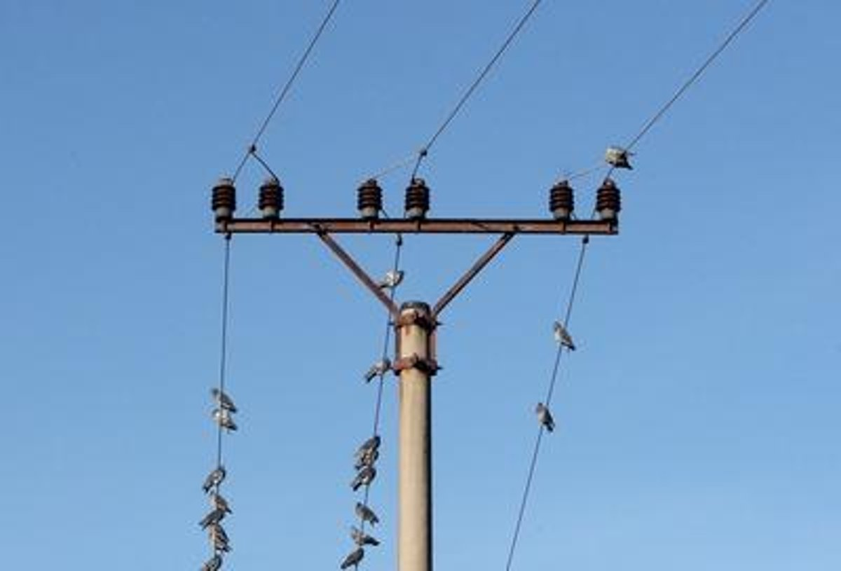 Experts Monitor The Danger Of Electric Wiring For Birds Spectator Dangerous Electrical