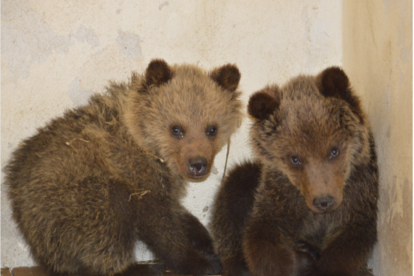 Two cubs in Zoo Bojnice