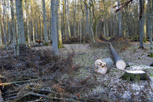 Massive logging in Slovakia, illustrative stock photo