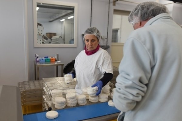 New cheese factory opened in Senica, April 12.