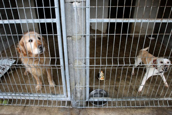 Some animals in shelters and quarantine centres have experienced cruel treatment.