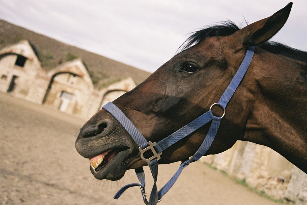 Horses can laugh, too.