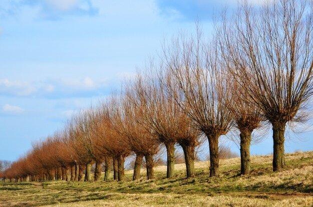 Pollard trees.