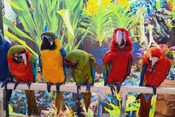 A flock of macaws has become a new attraction in Banská Bystrica.