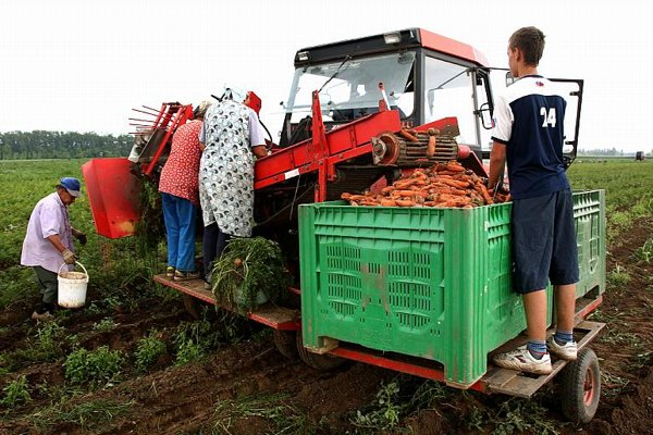 Slovakia's 2009 harvest could fall almost 15%.