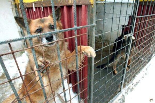 Quarantine Rescue center in Zvolen