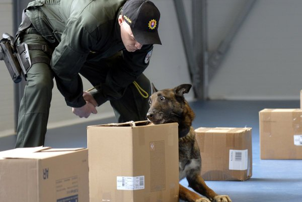 A police dog being trained.
