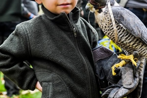 Young falconer in Poľný Kesov