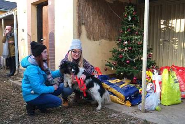 Christmas in Poprad shelter
