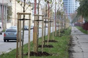 We can plant trees to combat impacts of climate change.