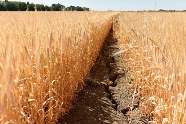 Drought, illustrative stock photo