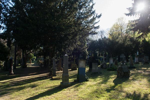 The Cemetery at Kozia Brána