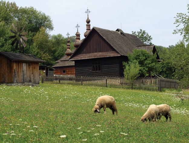 Sheep graze near a three-domed wooden church, Eastern Slovakia