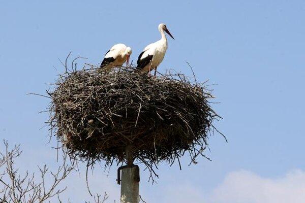 Storks, illustrative stock photo